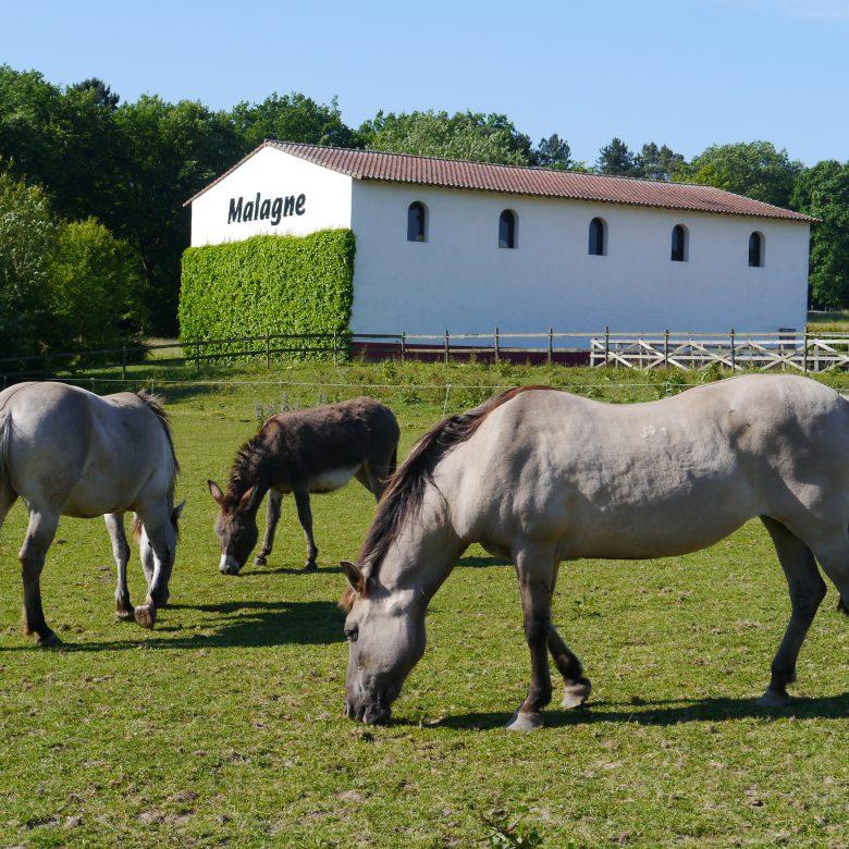 Malagne - Chevaux